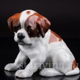 Статуэтка собаки из фарфора Щенок сенбернара, Heubach, Германия, нач. 20 века.